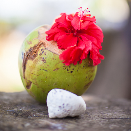 shaktivating-retreat-costa-rica-coconut-hibiscus-shell-pura-vida