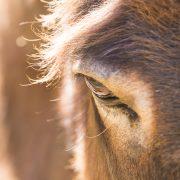 shaktivating-retreat-mount-shasta-goddess-nature-donkey